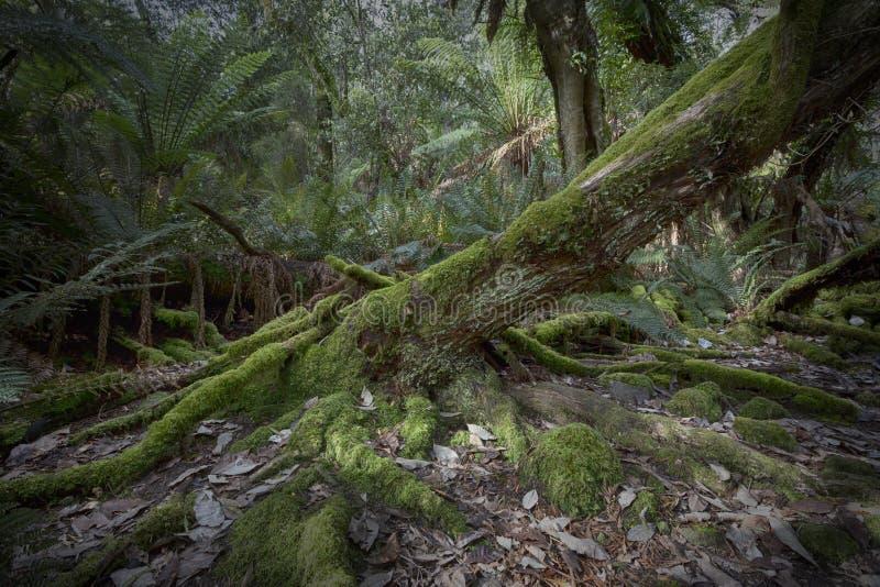 Vieille ouverture de décomposition Forest Floor image libre de droits