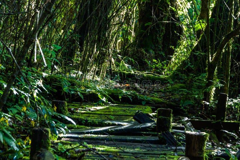Vieille passerelle en bois de pied image stock