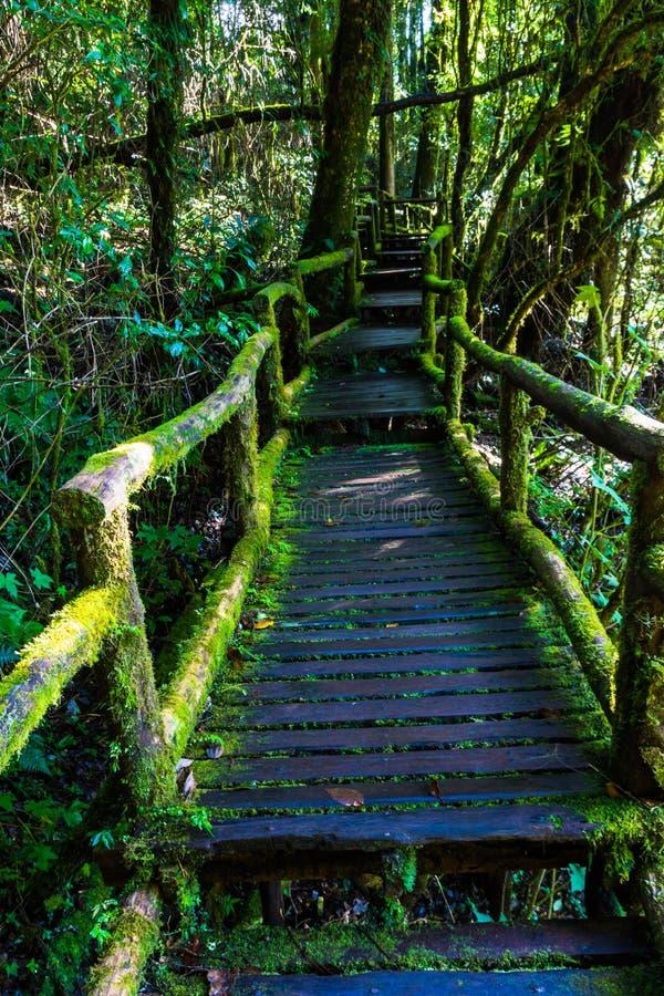 Vieille passerelle en bois de pied photo libre de droits