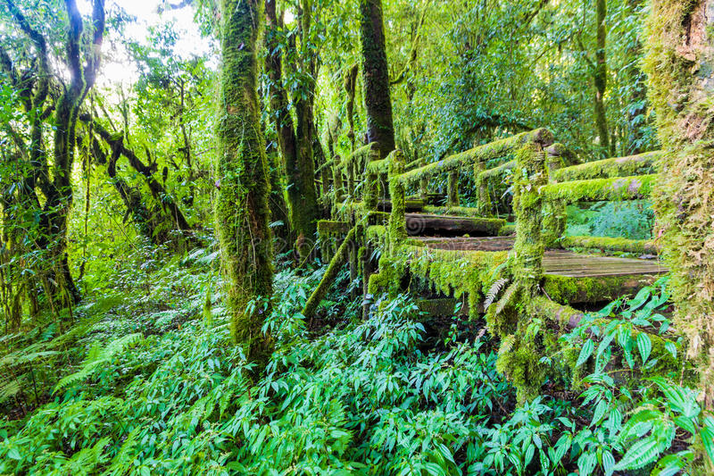 Vieille passerelle en bois de pied image libre de droits