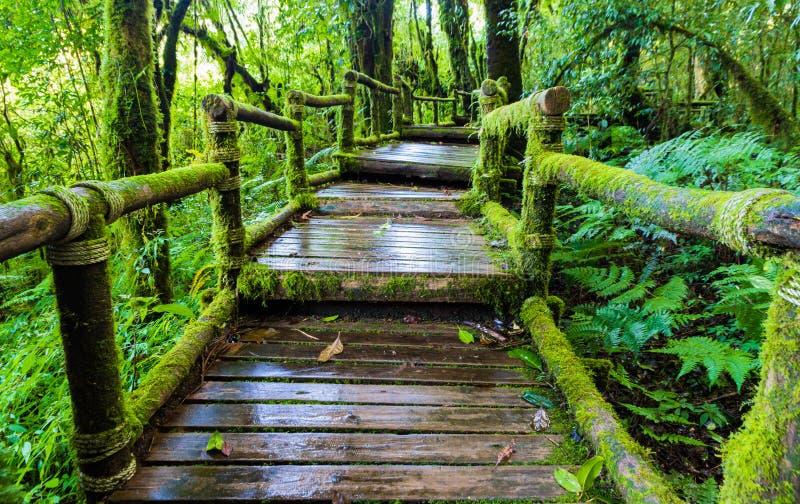 Vieille passerelle en bois de pied photographie stock libre de droits