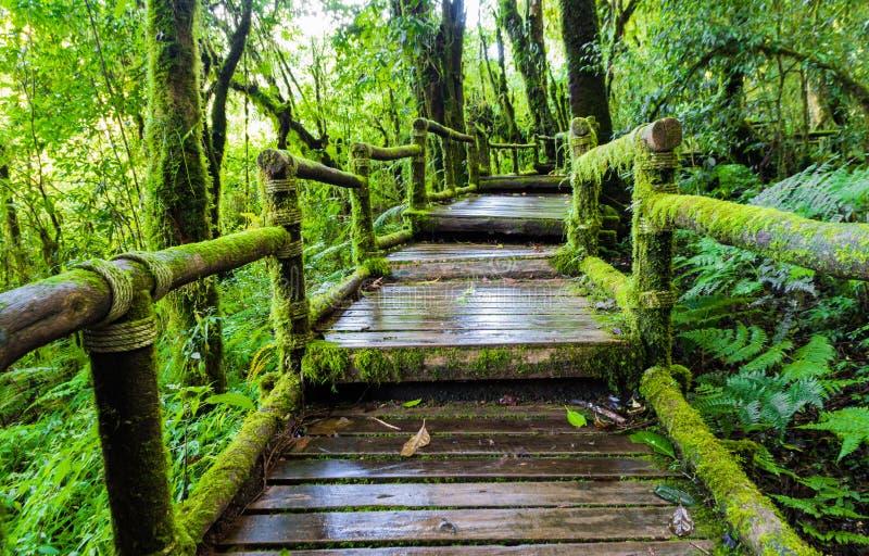 Vieille passerelle en bois de pied photographie stock