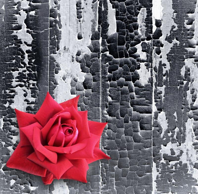 Vieille peinture sur un mur en bois photographie stock