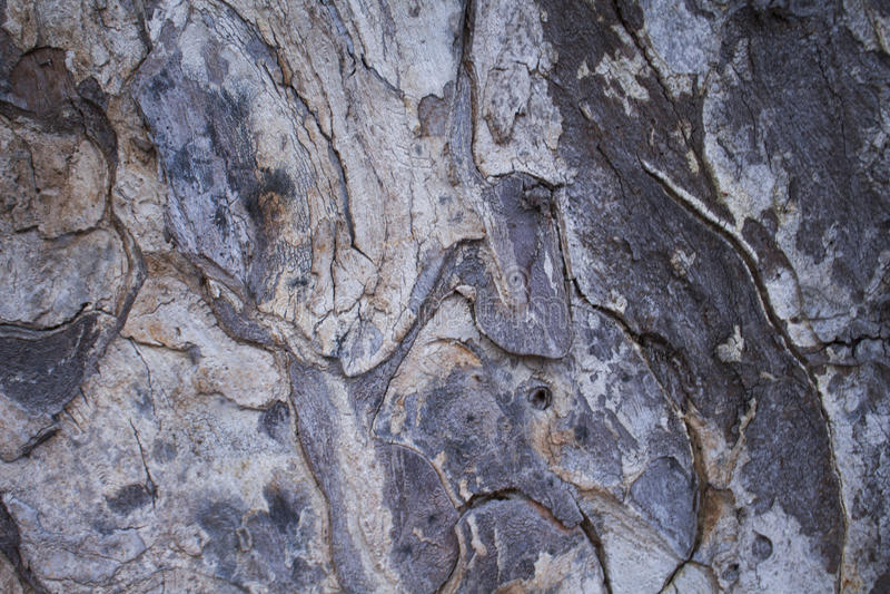 Vieille photo de texture de plan rapproché d'écorce de pin Plan rapproché rustique de tronc d'arbre photos libres de droits