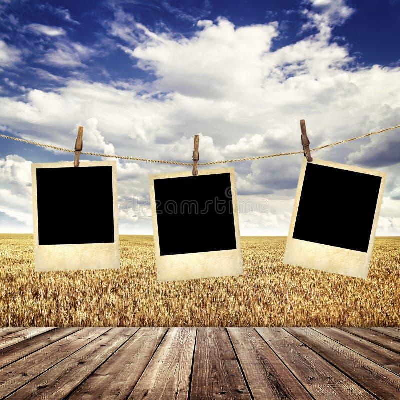 Vieille photo instantanée sur une corde sur le fond d'un champ de blé photo libre de droits