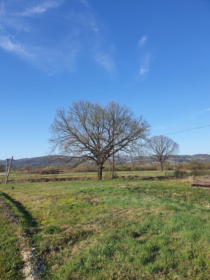 Vieille République d'arbre de Srpska photographie stock