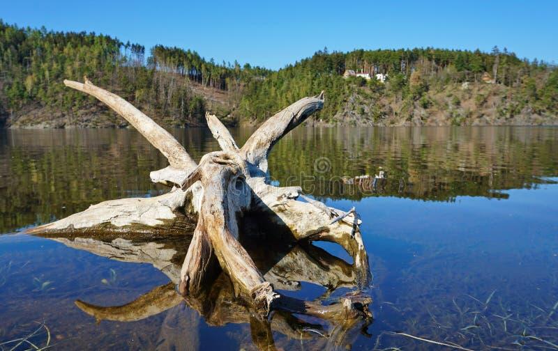 Vieille racine d'un arbre dans l'eau image stock