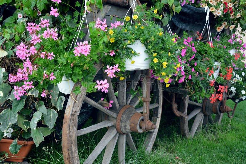 Vieille roue de chariot complètement de différentes fleurs photo libre de droits