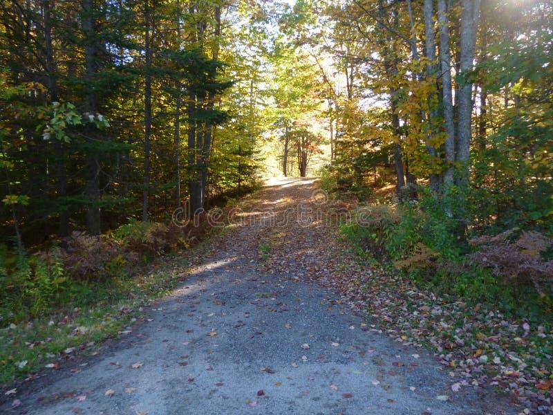 Vieille route pavée dans la forêt image libre de droits