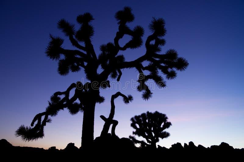 Vieille silhouette d'arbre de Joshua photo libre de droits