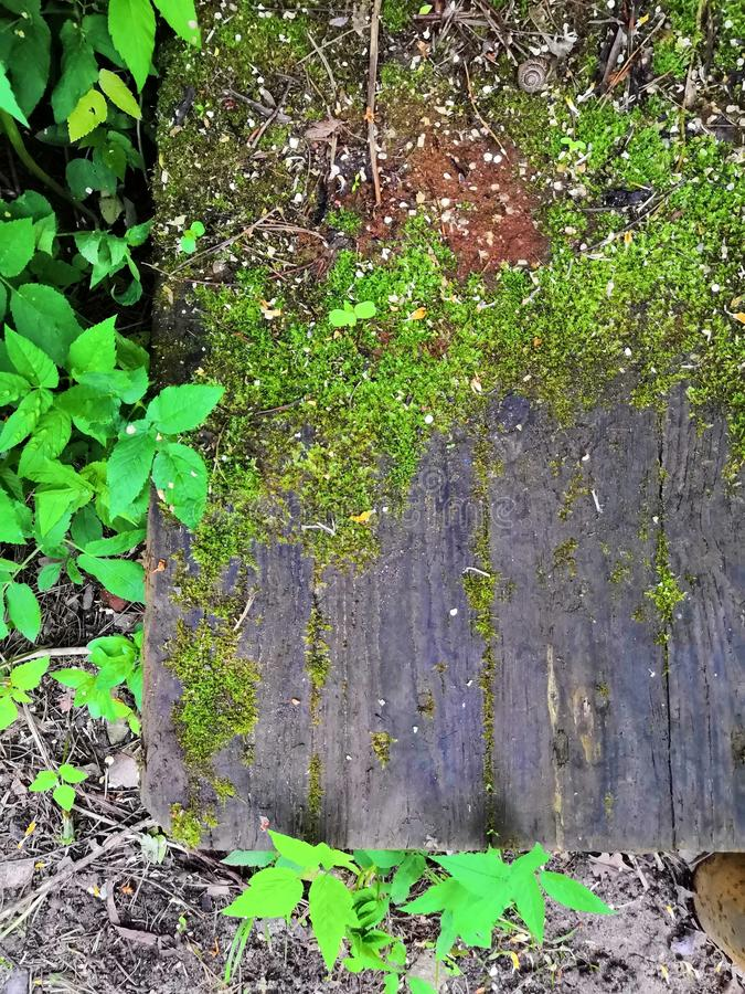 Vieille surface en bois de bois de construction avec le fond vert moussu et de feuilles photo libre de droits