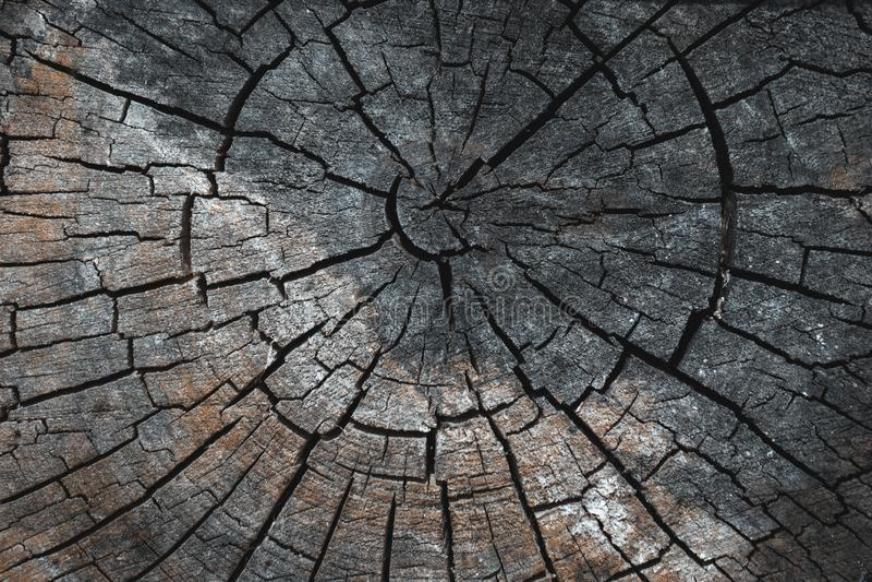 Vieille texture coupée en bois brune grise Fin foncée grunge de fond  Texture détaillée d'une section criquée d'un arbre photos stock