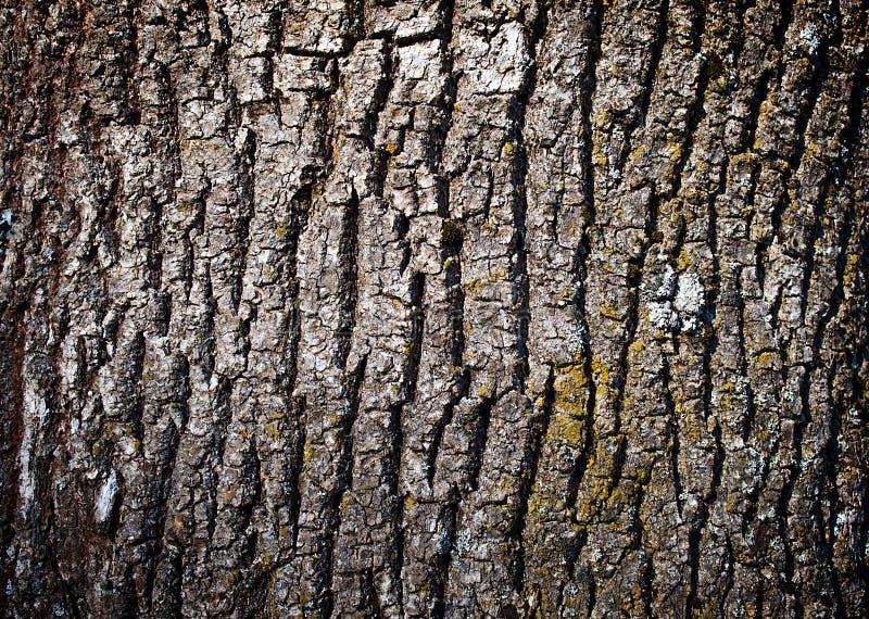 Vieille texture d'écorce d'arbre photographie stock