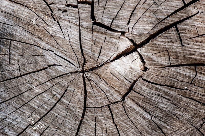 Vieille texture de tronçon d'arbre photo libre de droits