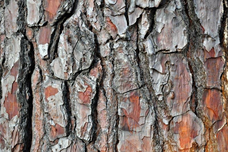 Vieille texture en bois criquée d'écorce photo stock