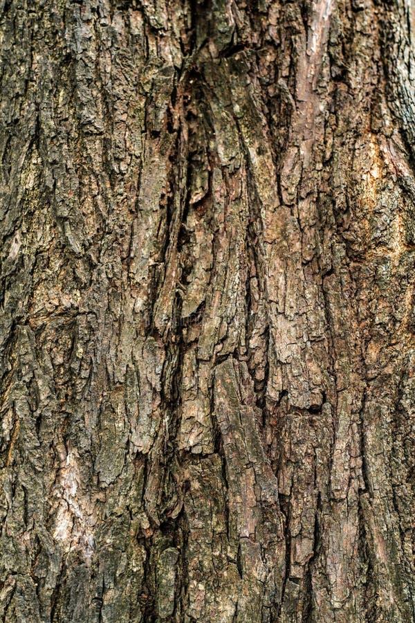 Vieille texture en bois d'écorce image stock