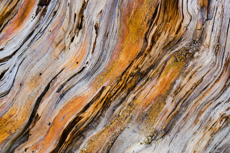 Vieille texture en bois d'arbre de pin photo libre de droits