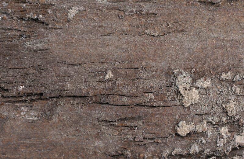 Download Vieille Texture En Bois De Fond Image stock - Image du texture, matériau: 8652005