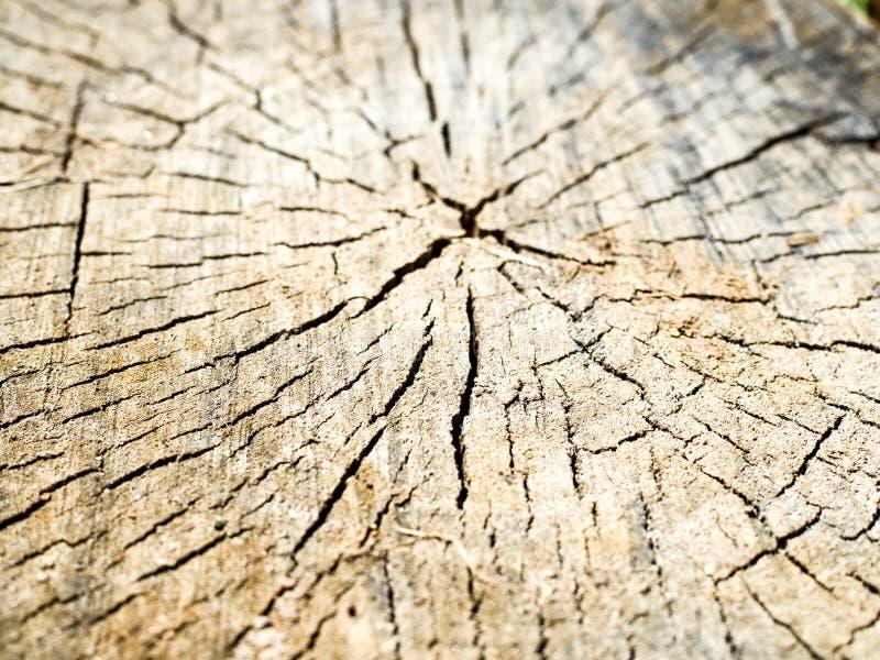 Vieille texture en bois de tron?on d'arbre photographie stock