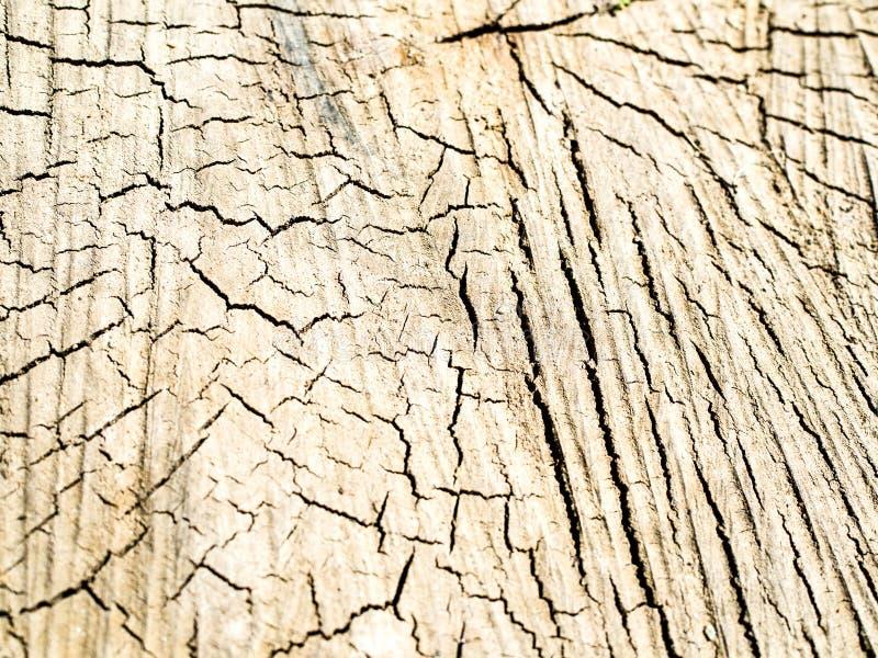 Vieille texture en bois de tron?on d'arbre photographie stock libre de droits