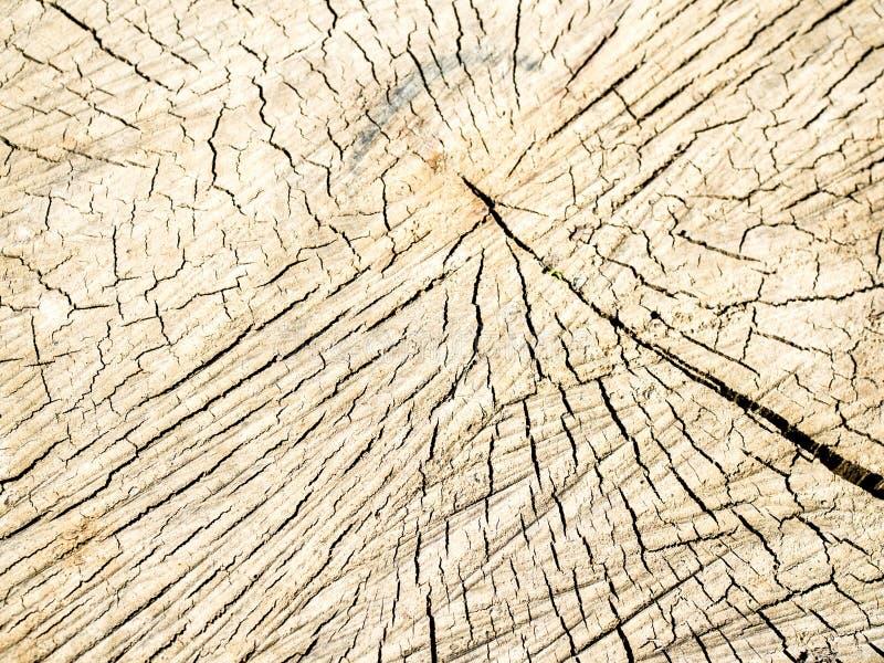 Vieille texture en bois de tron?on d'arbre photos libres de droits