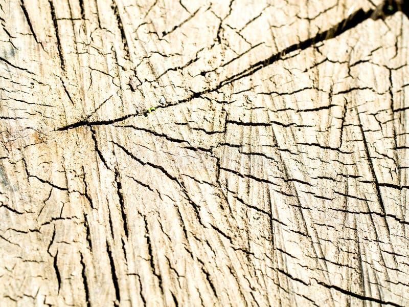 Vieille texture en bois de tron?on d'arbre photo libre de droits