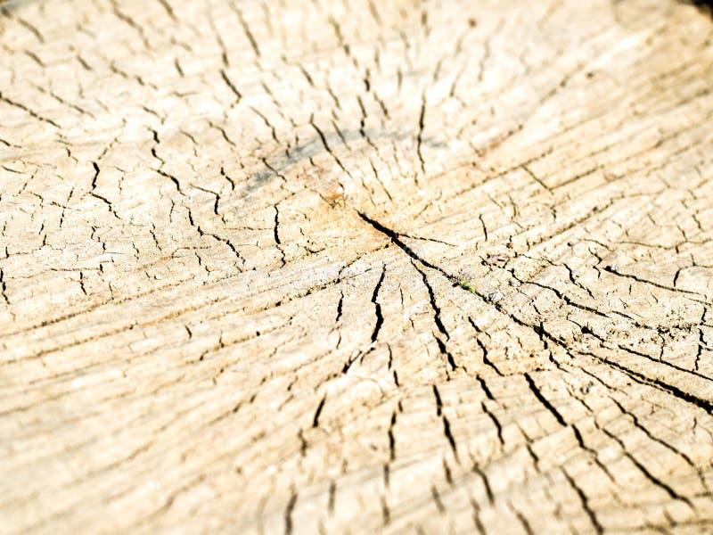 Vieille texture en bois de tron?on d'arbre image stock