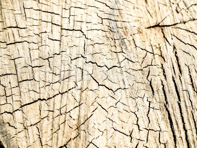 Vieille texture en bois de tron?on d'arbre photos stock