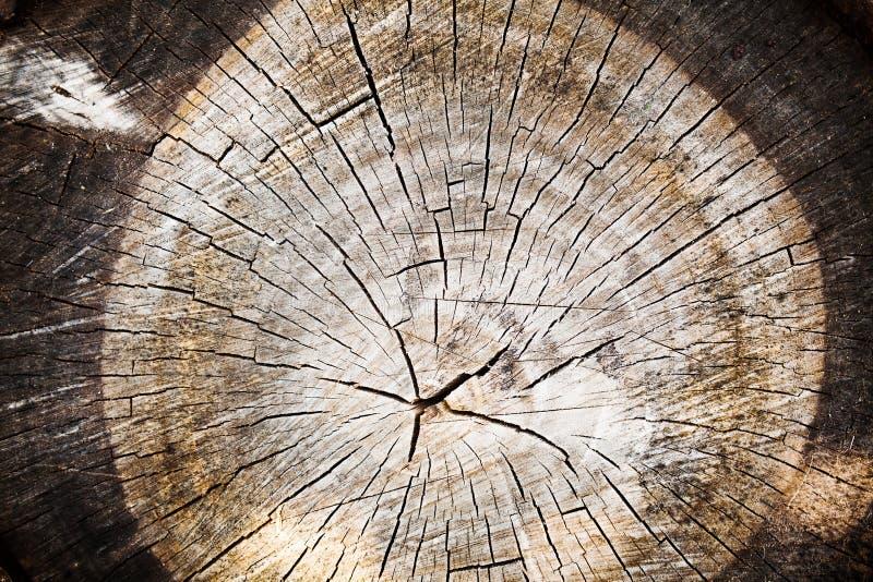 vieille texture en bois de tronc d 39 arbre coup photo stock image du dur e industrie 33351298. Black Bedroom Furniture Sets. Home Design Ideas