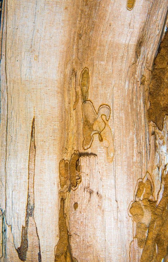Vieille texture mouldering en bois de chêne photo libre de droits