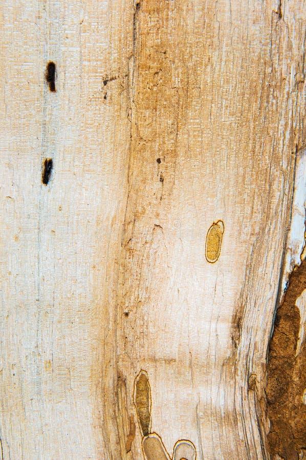 Vieille texture mouldering en bois de chêne images stock