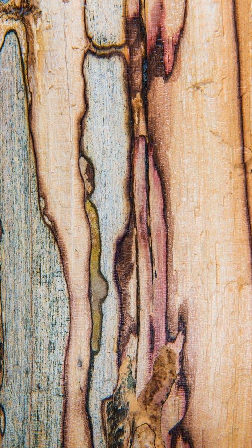 Vieille texture mouldering en bois de chêne image libre de droits