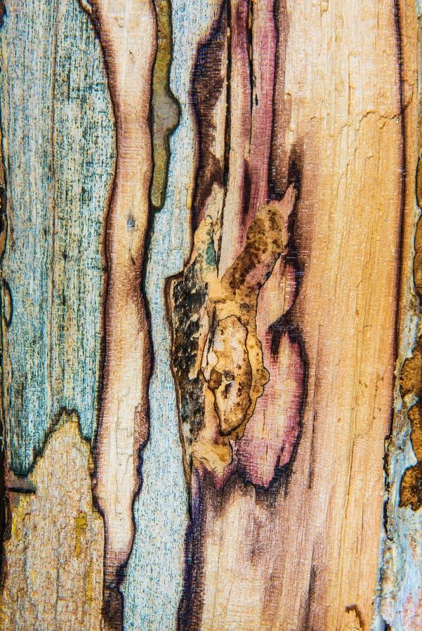Vieille texture mouldering en bois de chêne images libres de droits
