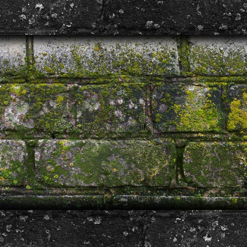 Vieille texture verte de moule de modèle de pierre de mur de mousse image stock