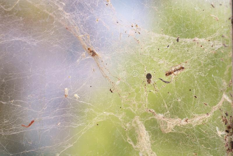 Vieille toile d'araignée épaisse sur le verre photographie stock libre de droits