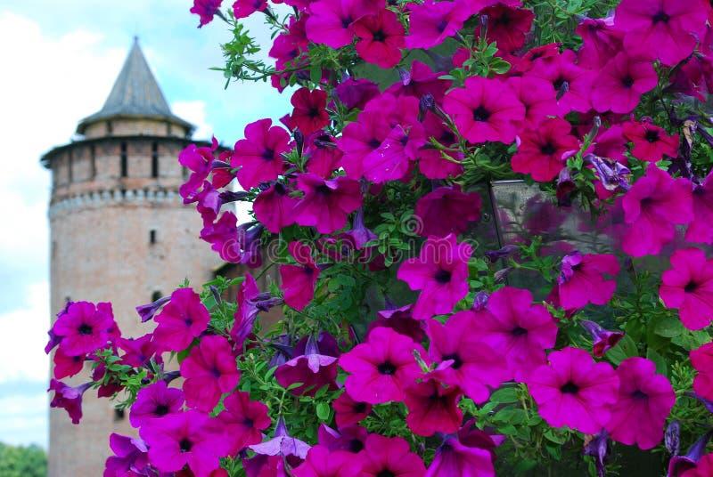 vieille tour de marinkina vue par des fleurs kremlin dans kolomna russie photo stock image du. Black Bedroom Furniture Sets. Home Design Ideas