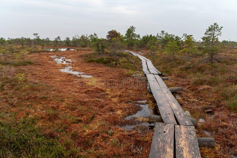 vieille traînée en bois de promenade de planche dans le secteur de marais près de l'eau photo libre de droits