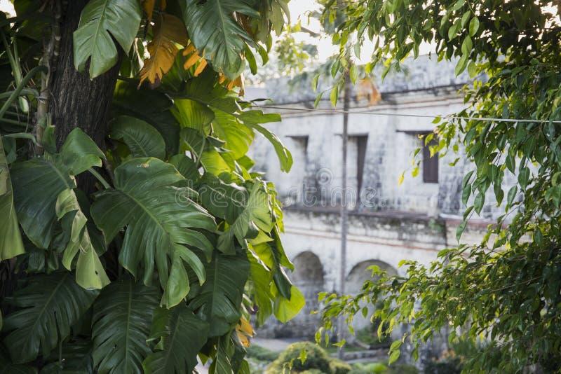 Vieille vue historique de maison par des plantes tropicales Vue de San Pedro de fort par la plante verte photographie stock