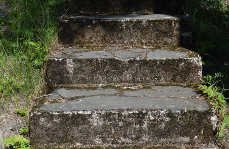 Vieilles étapes en pierre superficielles par les agents couvertes dans la mousse photographie stock libre de droits