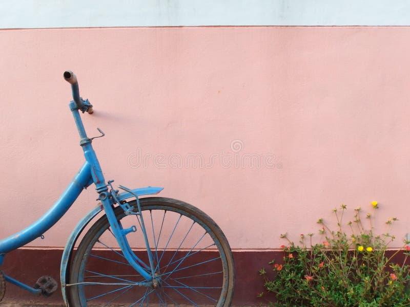 Vieilles bicyclette et fleurs bleues devant le mur rose photos libres de droits