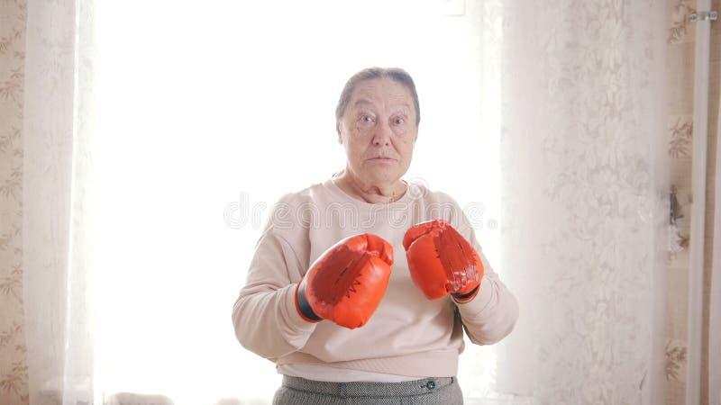 Vieilles femmes supérieures enfermant dans une boîte dans les gants rouges, regardant agressif et drôle, prêt à poinçonner photographie stock libre de droits