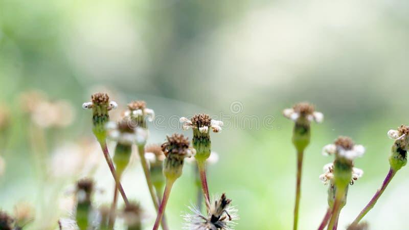 Vieilles fleurs image stock