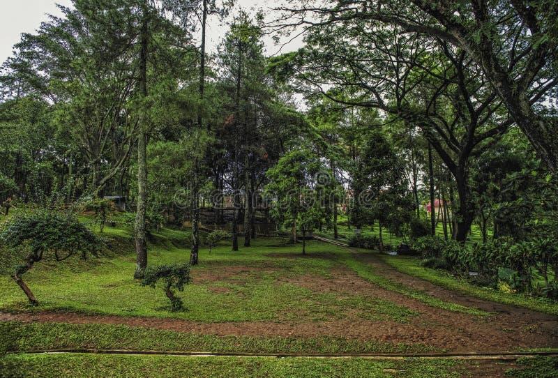 Vieilles herbes dans la cour autour du bâtiment historique images libres de droits
