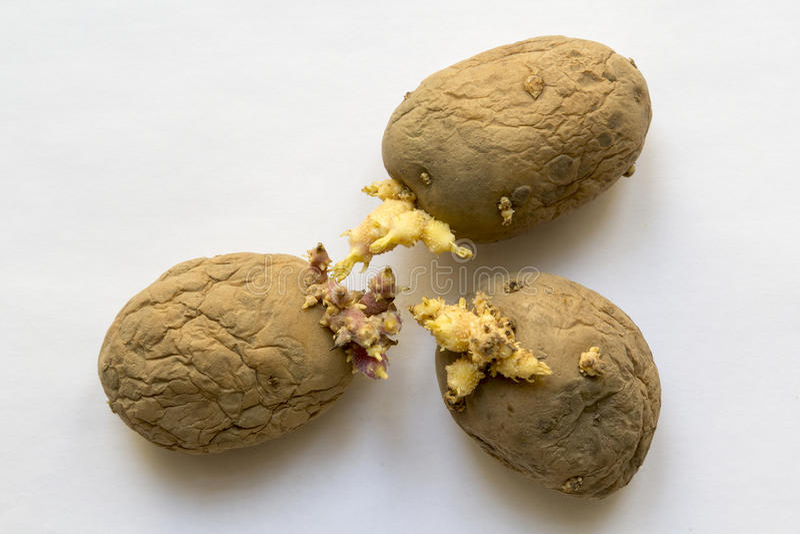 Vieilles pommes de terre images libres de droits