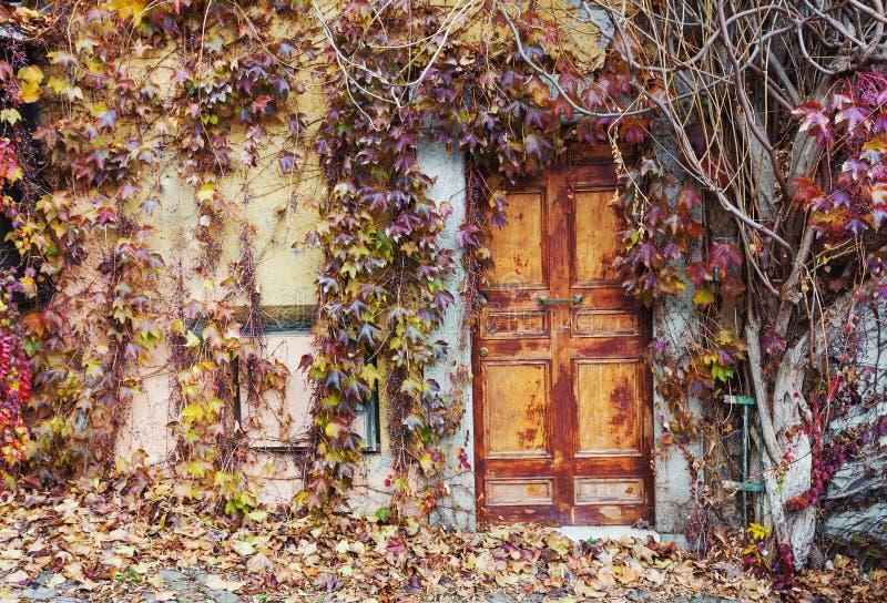 Vieilles portes abandonnées envahies avec des vignes en automne photographie stock