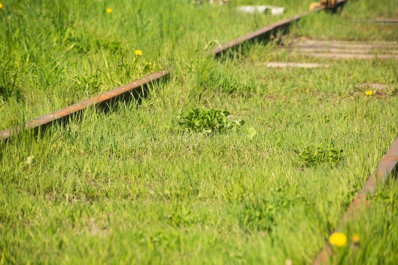 Vieilles voies de chemin de fer envahies avec l'herbe verte images libres de droits