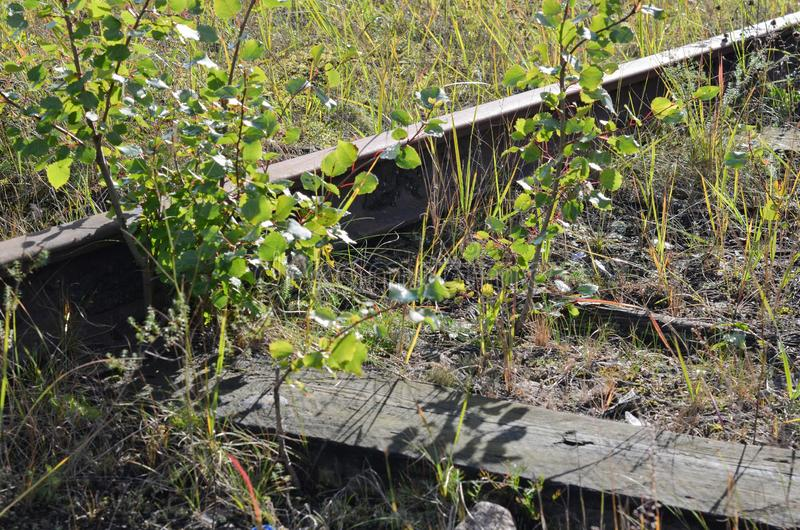 Vieilles voies de chemin de fer usées dans la perspective d'herbe verte et de végétation photographie stock