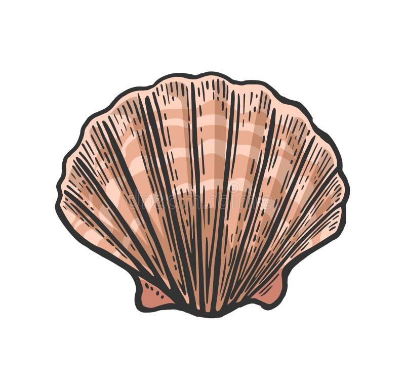 Vieira do shell do mar Ilustração preta do vintage da gravura No fundo branco ilustração royalty free
