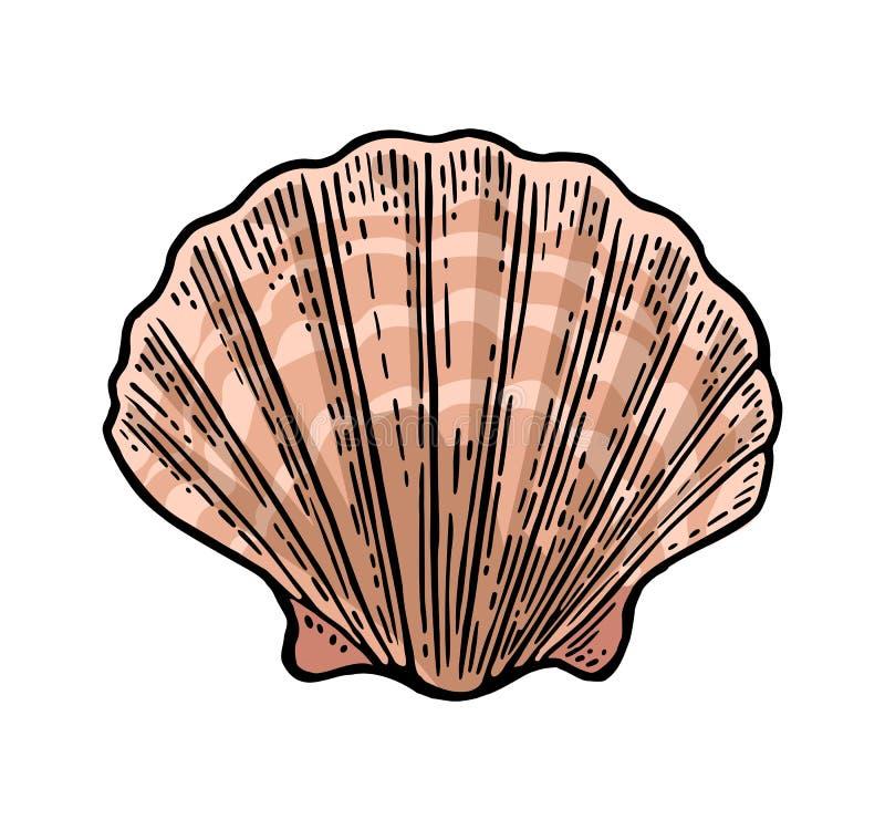 Vieira do shell do mar Ilustração do vintage da gravura da cor Isolado no fundo branco ilustração do vetor