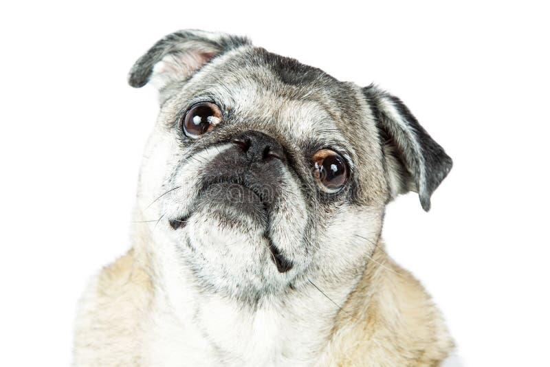 Vieja expresión del dulce del perro del barro amasado imágenes de archivo libres de regalías